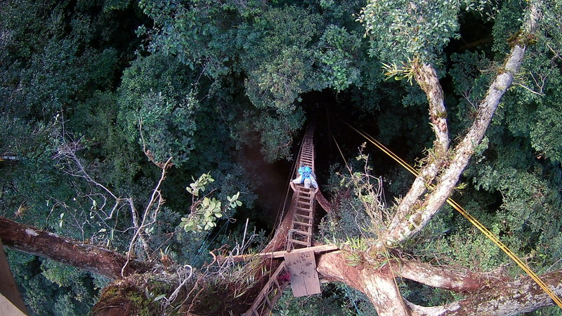 Climbing canopy platform #2