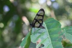 15 - mariposa